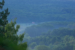 Light misty over the Codrii reserve at dawn, central Moldova, July 2009  -  Wild Wonders of Europe / Geslin
