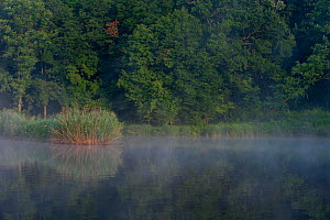 Light mist over lake in the Codrii reserve, central Moldova, July 2009  -  Wild Wonders of Europe / Geslin