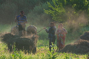 Farmers with traditional horse drawn cart harvesting hay, Central Moldova, July 2009  -  Wild Wonders of Europe / Geslin