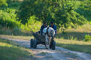 Two farmers in a traditional horse drawn cart near Codrii Reserve, Central Moldova, July 2009  -  Wild Wonders of Europe / Geslin