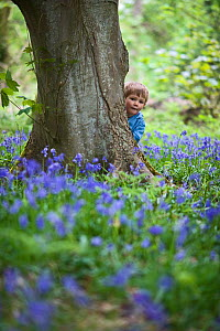 Child looking out from behind tree trunk in woodland with a Bluebell cover, Norfolk, UK, May, model released  -  David Tipling