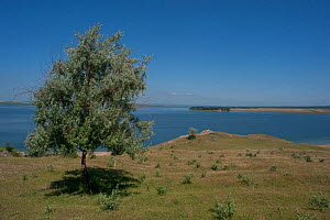 Tree by a lake, Central Moldova, June 2009  -  Wild Wonders of Europe / Geslin