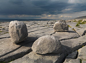 Karst limestone landscape, The Burren, County Clare, Ireland, June 2009  -  Wild Wonders of Europe / Hermansen