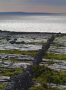 Karst limestone landscape, Ailladie coast, The Burren, County Clare, Ireland, June 2009  -  Wild Wonders of Europe / Hermansen