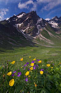 Wood cranesbill (Geranium sylvaticum) and Buttercups (Ranunculus breyninus) flowering with the Grauspitz (2,599m) in the distance, Liechtenstein, June 2009  -  Wild Wonders of Europe / Giesbers