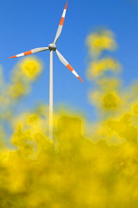 Wind turbine with oil seed rape flowers in the foreground, Sarre, Germany - Michel Poinsignon