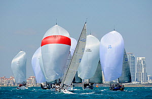 Farr 40 fleet downwind, Miami Grand Prix, Florida, USA. March 2010. - Rick Tomlinson
