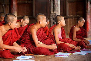 Young Buddhist monks sitting cross legged in a lesson, buddhist monastery, Inle Lake, Shan State, Myanmar, Burma. August 2009  -  Inaki Relanzon