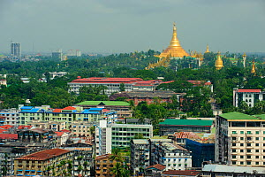 Cityscape including view of Shwedagon Paya, the most important buddhist place in all Myanmar, Yangon, Rangun, Myanmar, Burma. September 2009  -  Inaki Relanzon