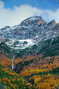 Bujaruelo Valley with stream and waterfall and  snow above the tree line; mixed deciduous and coniferous forest, Ordesa and Monte Perdido National Park, Pyrenees, Spain. October 2009  -  Inaki Relanzon