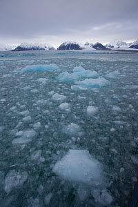 Thawing ice floes on the sea, Svalbard, Norway, September 2009 - Wild Wonders of Europe / Cairns