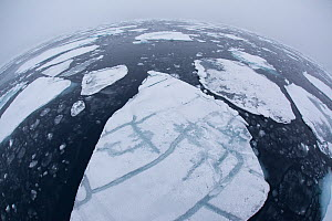 Pack ice on sea, Svalbard, Norway, August 2009  -  Wild Wonders of Europe / Cairns