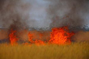Steppe fields on fire, Bagerova Steppe, Kerch Peninsula, Crimea, Ukraine, July 2009 - Wild Wonders of Europe / Lesniewski