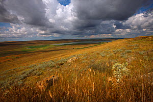 Steppe landscape, Bagerova Steppe, Kerch Peninsula, Crimea, Ukraine, July 2009 - Wild Wonders of Europe / Lesniewski