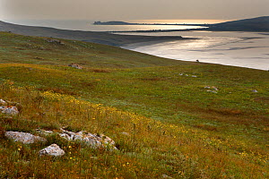 Bagerova Steppe, Kerch Peninsula, Crimea, Ukraine, July 2009 - Wild Wonders of Europe / Lesniewski