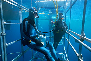 Two divers in shark cage, waiting for Great white shark, off shark-diving boat, Guadalupe, Mexico, September 2002  -  Sue Flood