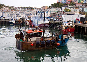 Small scallop dredger pulling into Brixham harbour, Devon, England, UK, 2009.  -  Toby Roxburgh