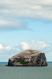 Castle ruins and Lighthouse on Bass Rock in the Firth of Forth, East Lothian, Scotland, UK  -  Philip Dalton