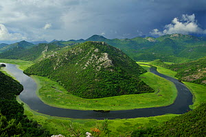 River Crnojevica with a central channel between aquatic plants, flowing round Pavlova Strana, Lake Skadar National Park, Montenegro, June 2009. BOOK & WWE OUTDOOR EXHIBITION.  -  Wild Wonders of Europe / Radisic