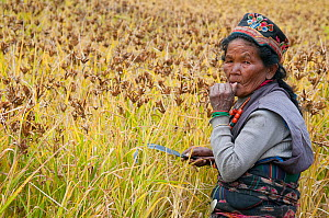 Woman with scythe, working in fields to harvest millet. Tamang ethnic group, Tamang heritage trail, Thuman, Langtang region, Nepal.  November 2009  -  Bernard Castelein