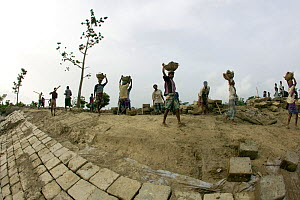 Building a sea wall to combat climate change and protect fishing village from floods, Sundarbans, Bangladesh, October 2008  -  David Woodfall
