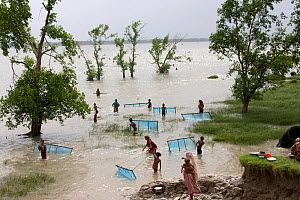 Large numbers of children fishing for shrimp fry on coastal margin land damaged by typhoon Sidr in November 2007, Sundarbans, Bangladesh, October 2008 - David Woodfall