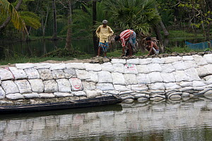 Building a sea wall to combat climate change and protect fishing village from flooding, Sundarbans, Bangladesh, June 2008 - David Woodfall