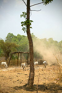 Drought affected agricultural land, monsoon wind blowing top soil from fields, Madhya Pradesh,  India, Asia - David Woodfall