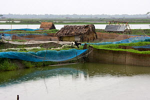 Shrimp ponds for Shrimp farming, resulting in an increased salinity threat to rural water supplies, Ganges delta, Bangladesh, November 2008 - David Woodfall