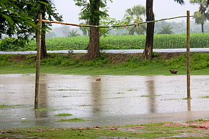 Flooded football pitch during the monsoon, Ganges delta, Bangladesh, November 2008 - David Woodfall