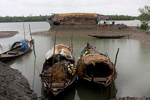 Boats from a fishing village adjacent to Sundarbans NP (seen in the background) fishing threatens the National Park, Ganges delta, Bangladesh, November 2008  -  David Woodfall