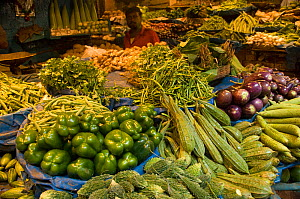 Vegetables including green peppers okra and aubergine for sale at local market, Calcutta, India, November 2007 - Patricio Robles Gil