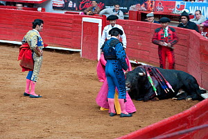 Matador and his cuadrilla surround dying bull at bullfight, Plaza de Toros, Mexico City, Mexico  -  Patricio Robles Gil