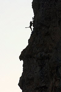 Silhouette of Gelada baboon (Theropitecus gelada) climbing steep cliff, Simien Mountains NP, Ethiopia  -  Patricio Robles Gil