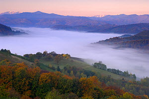 Rural landscape at dawn with low lying mist in valley, near Zarnesti, Transylvania, Southern Carpathian Mountains, Romania, October 2008 - Wild Wonders of Europe / Dörr
