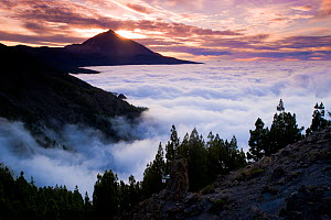 Teide volcano (3,718 m) above a sea of fog at sunset, Teide National Park, Tenerife Island, Canary Islands, Spain, December 2008  -  Wild Wonders of Europe / Relanzón