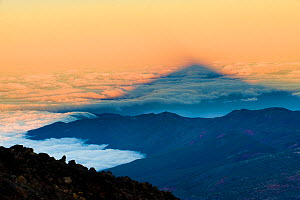 Shadow of the Teide volcano (3,718m) on cloud sea at sunset, Teide National Park, Tenerife Island, Canary Islands, Spain, December 2008 - Wild Wonders of Europe / Relanzó