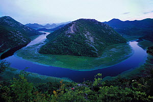 River Crnojevica with a central channel between aquatic plants, flowing round Pavlova Strana, at dawn, Lake Skadar National Park, Montenegro, August 2006  -  Wild Wonders of Europe / Radisic
