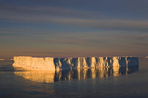 Tabular iceberg reflected at sunset in Erebus and Terror Gulf. Weddell Sea, Antarctica, October 2006.  -  Bryan and Cherry Alexander