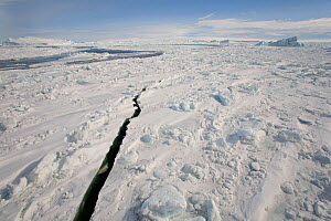 Crack in the sea ice in Erebus and Terror Gulf Antarctica, October 2006.  -  Bryan and Cherry Alexander