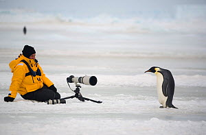 Photographer with telephoto lens on tripod waiting for Emperor penguin (Aptenodytes forsteri) to move further away. Snow Hill Island, Antarctica, October. - Bryan and Cherry Alexander