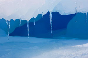 Icicles hanging from a ledge on an iceberg, Antarctica, October 2006.  -  Bryan and Cherry Alexander