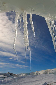 Icicles hanging from an undercut iceberg by the shore of Snow Hill Island, Antarctica, October 2006.  -  Bryan and Cherry Alexander