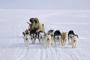 Inuit hunter and his wife travelling by dog sled on a seal hunting trip across sea ice near Igloolik. Nunavut, Canada, April 2008.  -  Bryan and Cherry Alexander