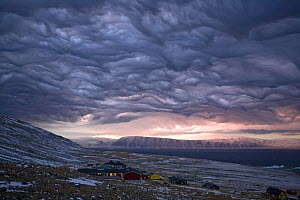 Dramatic 'Undulatus asperatus' cloud formation as a storm builds at dawn over Qaanaaq, Inglefield Bay. Northwest Greenland, September 2008. This cloud formation was first proposed as a new type of clo...  -  Bryan and Cherry Alexander