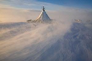 Nenets reindeer herder's camp on the tundra during a winter storm. Yamal Peninsula, Western Siberia, Russia, August 2008.  -  Bryan and Cherry Alexander