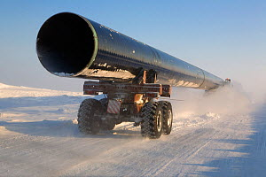 Truck carrying large section of gas pipe on a winter road near the Yurharovo gas field. Noviy Urengoi, Yamal, Western Siberia, Russia. - Bryan and Cherry Alexander