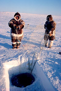 Two Inuit men from Igloolik checking a fishing net set under lake ice on the Melville Peninsula. Nunavut, Canada, 1990. Editorial use only. - Bryan and Cherry Alexander
