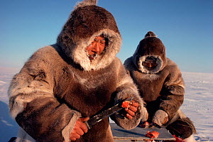 Two Inuit hunters eating Arctic char (Salvelinus alpinus) wearing caribou skin clothes. Igloolik, Nunavut, Canada, 1990. Editorial use only. - Bryan and Cherry Alexander