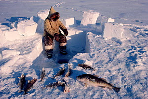 Inuit hunter jigging for cod though a hole in the ice. Igloolik, Nunavut, Canadian Arctic, 1990. - Bryan and Cherry Alexander